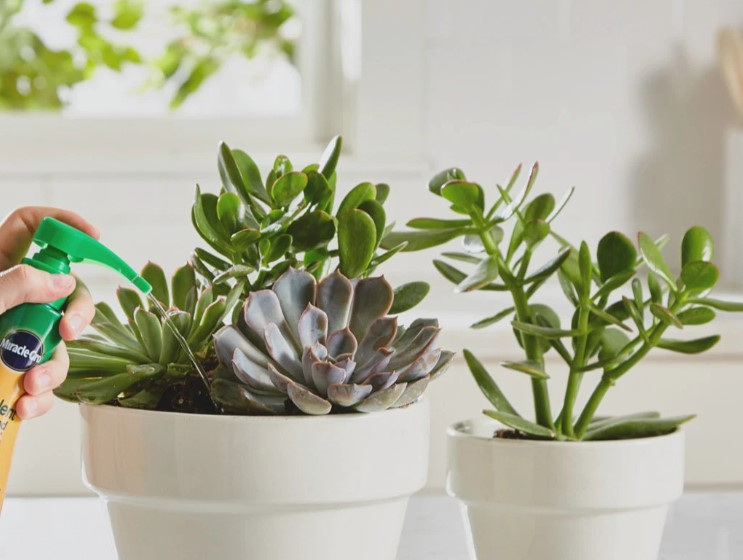 What Kind of Fertilizer is Best for Succulents?